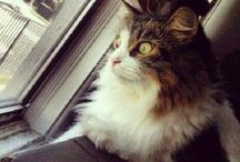 Cat's Meow - Windows/Doors / by Shari Fries