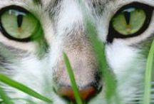 Animals / by Jenny Z