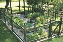 Outside / Inspiration for the great outdoor space at home and away. Gardening information included. :) / by Baird Yasenchok