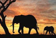 I <3 Elephants / by Paula Darling