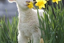 Spring! / by Sara Jane Howell