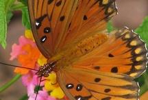 Bees, Birds & Butterflies / by Sara Jane Howell