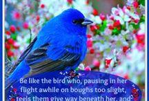 Birds / by Phyllis Hopper Coleman