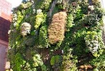 Green roofs & walls / by City of Sydney