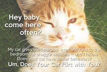 """For the Cat Lover / Items that make cat lovers go, """"Meeeow!"""" / by Dogster & Catster"""
