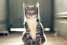 Cats in Beautiful Spaces / Cats and their environments in perfect harmony. / by Dogster & Catster
