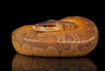 Snakes / by Cassie Belcher