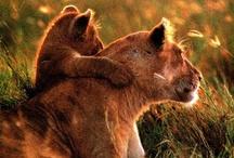 I ♥ Animals / by Faith Williams