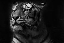 Photo Inspiration - Animals / Photos of animals that inspire me. / by Angela Pritchard