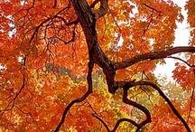 Fabulous Fall / by Elena Grana