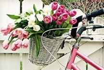 For the Love of Bikes / by Michele Yates {The Homesteading Cottage}