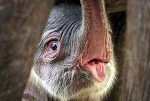 Beautiful Animals II / by Josie Goytisolo