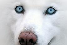 Dog Dog / by Ragazza Quai