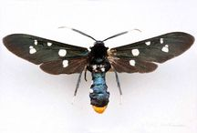 Bugs and Bones / by Jordan Lentz