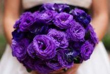 Flower Garden / by Chelsea Devine