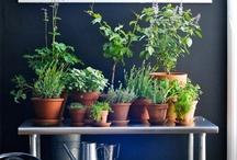 Herb Garden / by Monica Warford