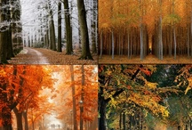 I have a thing for trees... / by Erica Albright