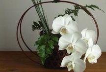 Ikebana & Tablescape  / by Clara Lo