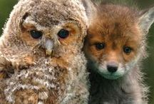 Foxes and Owls... / Two very beautiful and different creations of God.. / by Maryze Foust