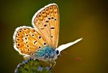 Butterflies and Moths / by Bonnie Koenig