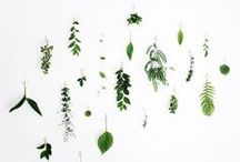 Plants / by Sarah - Coco Lapine