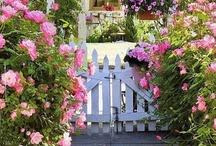 gardens / by Bridget Scoggins