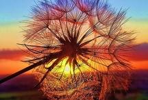 Nature pictures / by Bridget Scoggins
