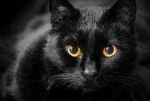El Gato Negro / by Chance Temple