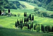 La Bella Italia / by Elizabeth Pizzinato | @duckandcake