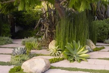 Landscaping : Cactus, succulents & Grass / by Roel van Heeswijk