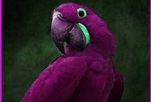 Birds / by Pam Childers