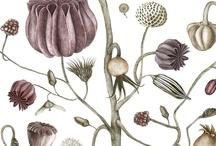 Plants & Flowers / by Judy Kaufmann
