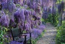 Wysteria Gardens / by Vineyard Court