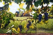 Texas Wineries / by Vineyard Court