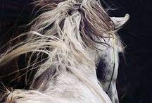 Horses / Favorite. / by B Buchholz Bottrel