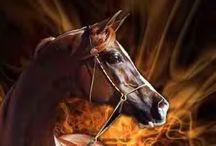 Horses... ♥ / by Jill Zaperach