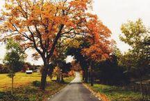 Seasonal | Fall  / by Amy Sauceda | Amoeba Landing