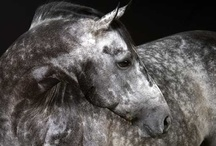 Horses, Dogs, and Others / by Christeen Hernandez