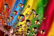 More Than A Rainbow / by MJS