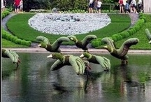 "Amazing ""Topiaries"" / by Dorie Hughes"