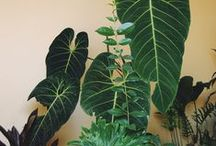 plants / by sarah adelman