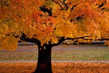 Fall / by Christy Hinton