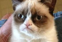 ❤ Grumpy Cat / by Nancy Nale
