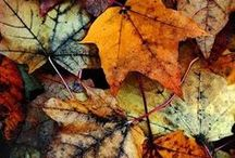 Fall  / by Melissa