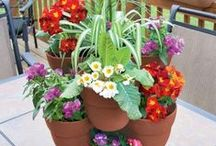 Container Gardens / by Alissa Morris-Alexander