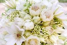 Flowers  / by Jordan Brown