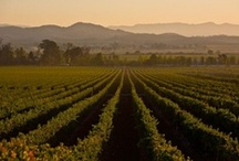 Northern California Wines / by Crowne Plaza Concord
