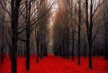 Tree Art / by Ann DeMarle