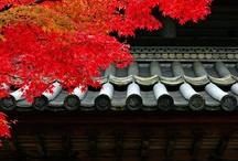 Japan / by inkspot