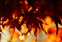 Autumn Leaves / by Gabee Kesler